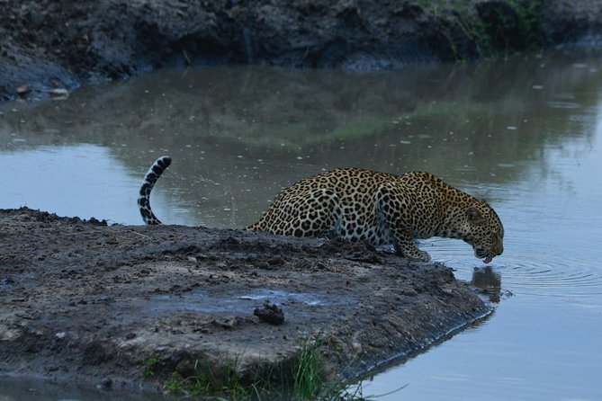 Classic Kenya Explore Safari 2020