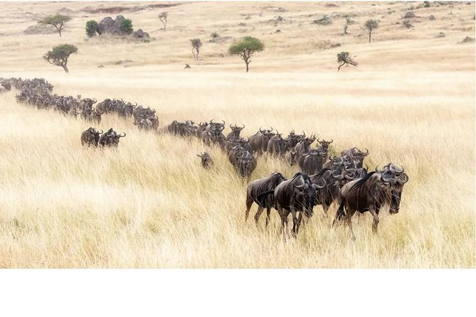 6 Days Wildebeest Migration Safari