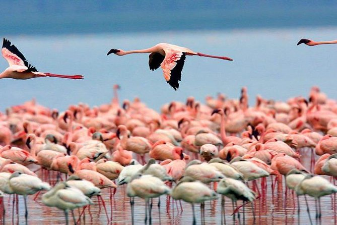 Full Day Lake Nakuru National Park Tour