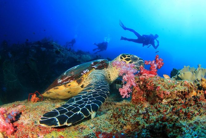 Scuba Diving from Hurghada photo 9