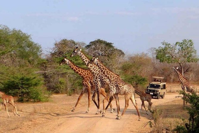 4-Day Selous Private Safari photo 13