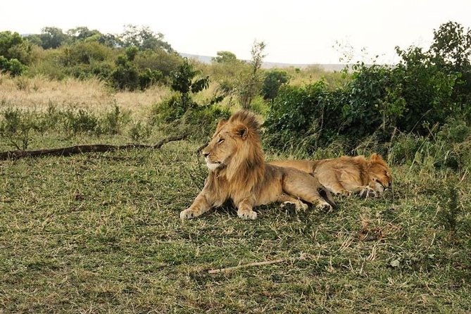 Super Budget Masai Mara Joining Safari