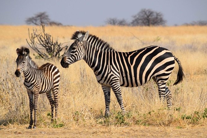 4-Day Wildlife Safari in Ruaha National Park photo 10