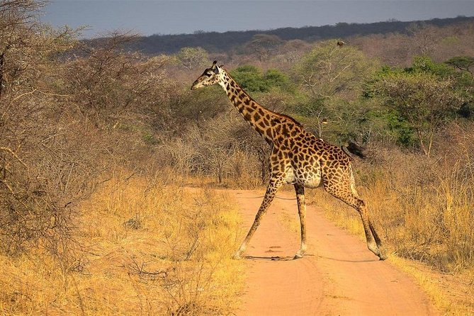 4-Day Wildlife Safari in Ruaha National Park photo 9