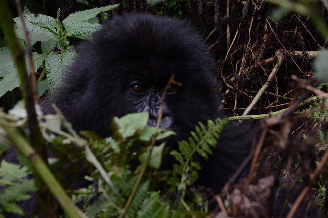 6 Exciting days in Rwanda