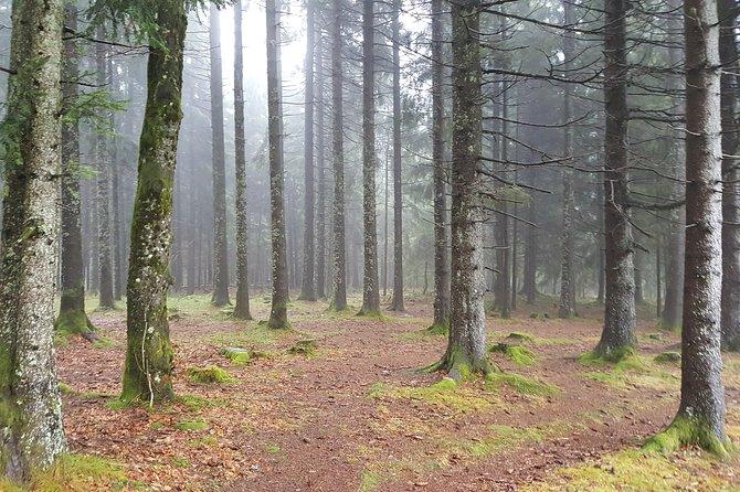 Private Black Forest Tour: Baden-Baden to Freiburg