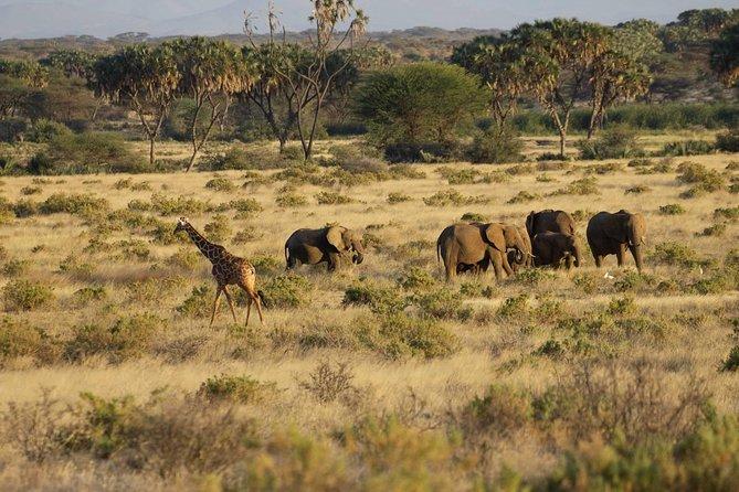 3-Day Classic Maasai Mara Safari