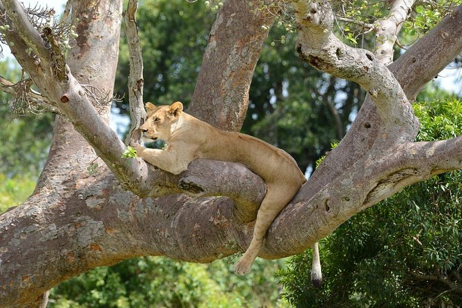 Classic Rhapsody Masai Mara Safari