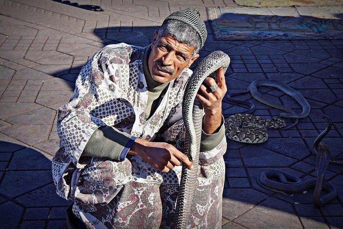 Guided Walk in The Medina of Marrakesh: Full-Day Visit & Seesighting tour