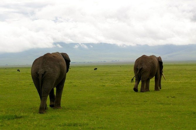 2 Days Lake Manyara & Ngorongoro Crater Tour