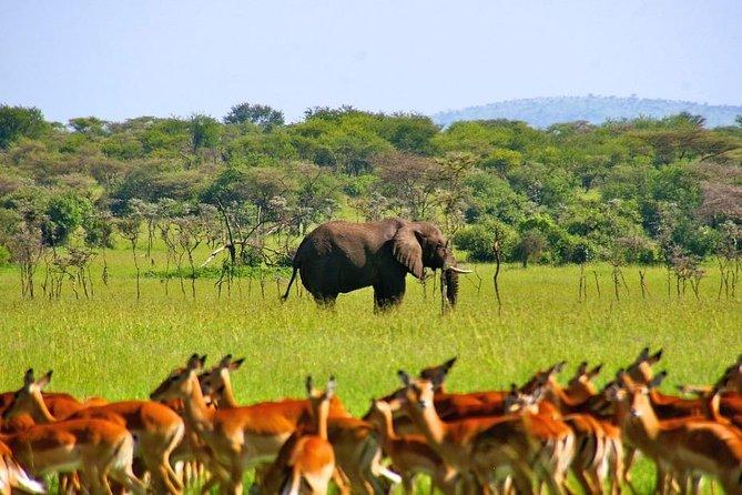 3 Days Mikumi and Udzungwa Trekking Safari in Tanzania