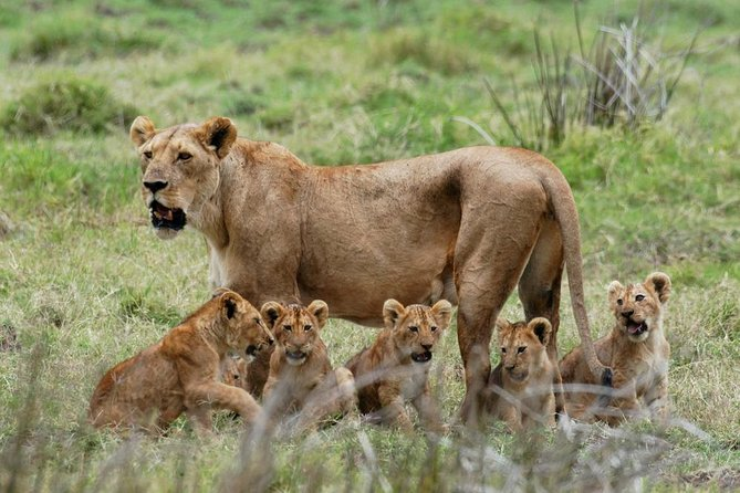 4-Day Wildlife Safari in Ruaha National Park photo 3