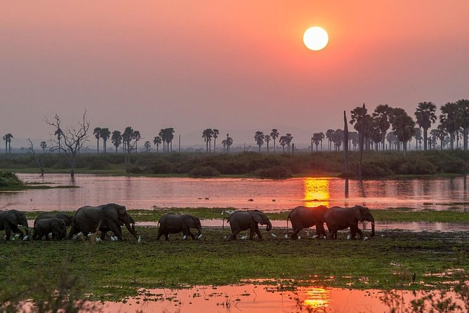 4-Day Selous Private Safari photo 6