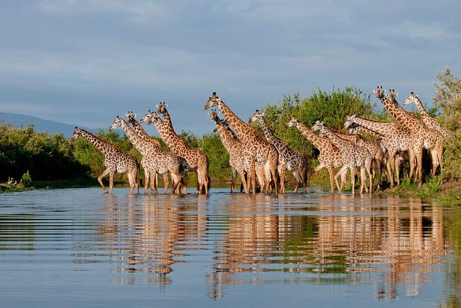 4-Day Selous Private Safari photo 4