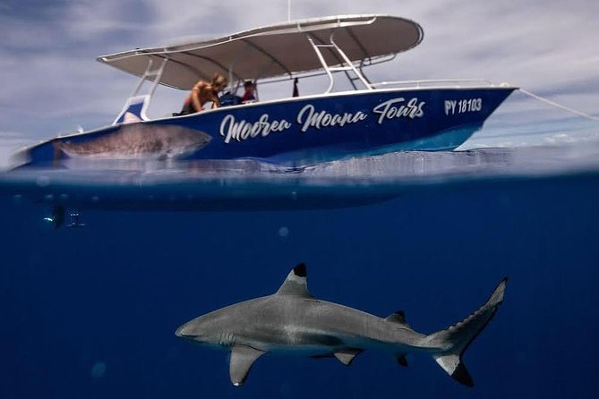 Moorea Shark Expedition