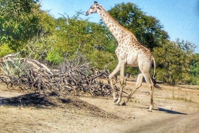 Game drive in the Mosi Oa Tunya National Park - Livingstone