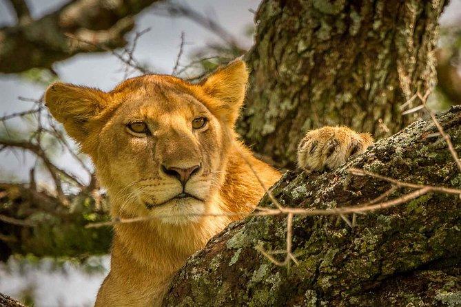 Astonishing 4 Day Safari to Tarangire N.P, Serengeti N.P and Ngorongoro Crater