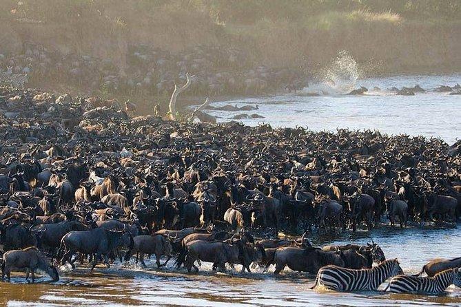 5 Days Safari in Serengeti Ngorongoro Manyara Tarangire