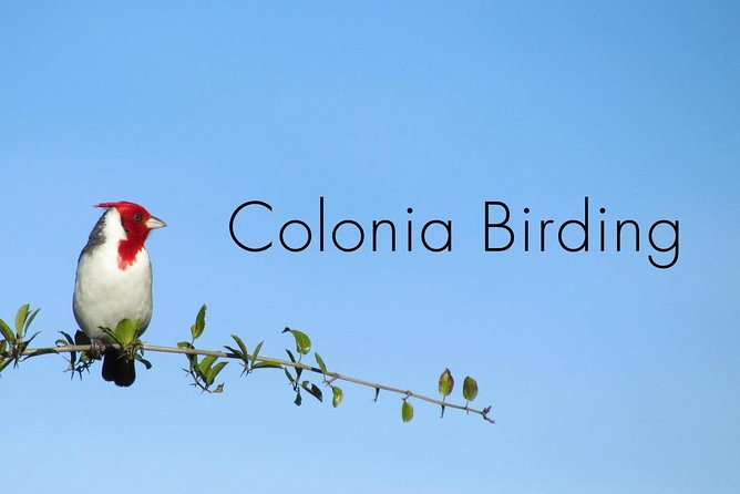 Full Day Birdwatching and Nature Tour