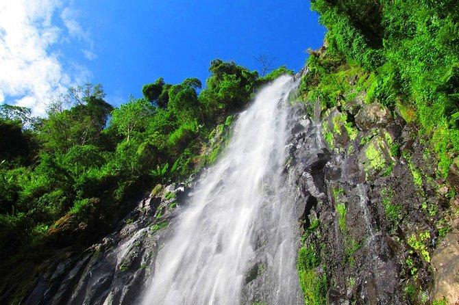 Kilimanjaro: Waterfall & Coffee Tour