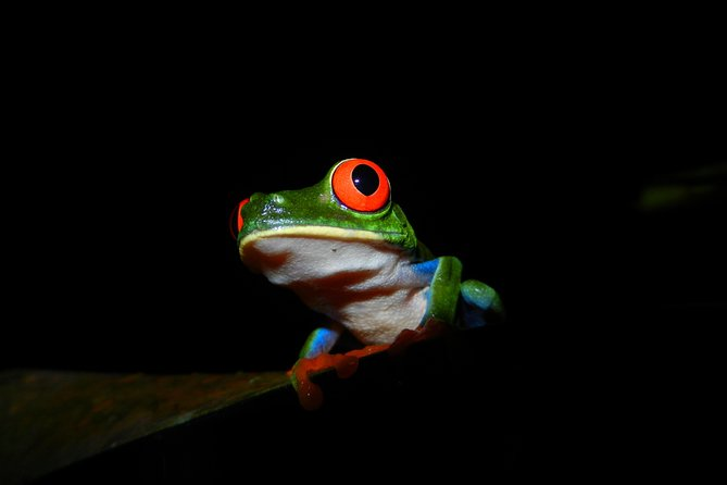Night Walk + Guide / Costa Rican Only