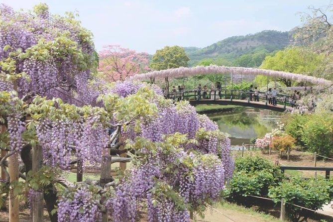Fuji Shibazakura Festival Sakura One Day Tour by Private's Charter Car Van