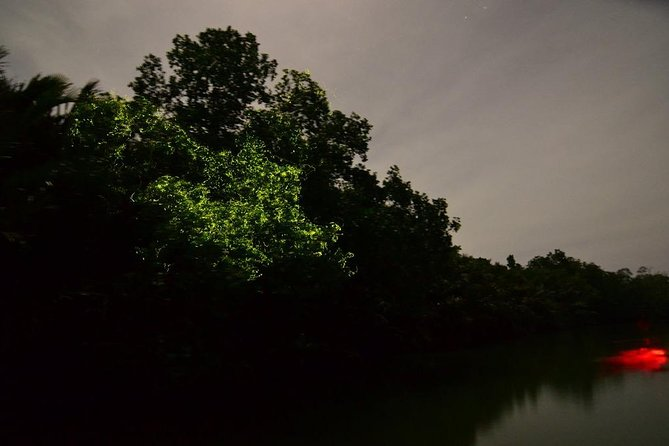 Bohol Firefly Watching photo 2