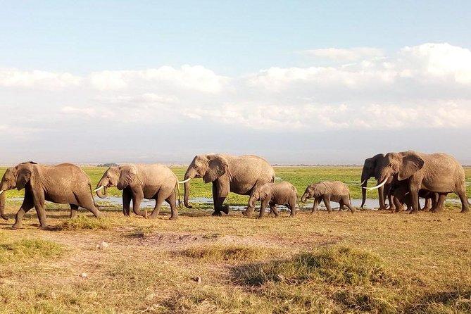 Tsavo And Amboseli National Park 3 days safari