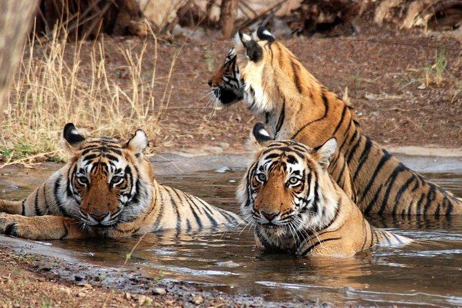 6 Days Golden Triangle Tour with Ranthambore: Delhi Agra Jaipur Ranthambore Tour