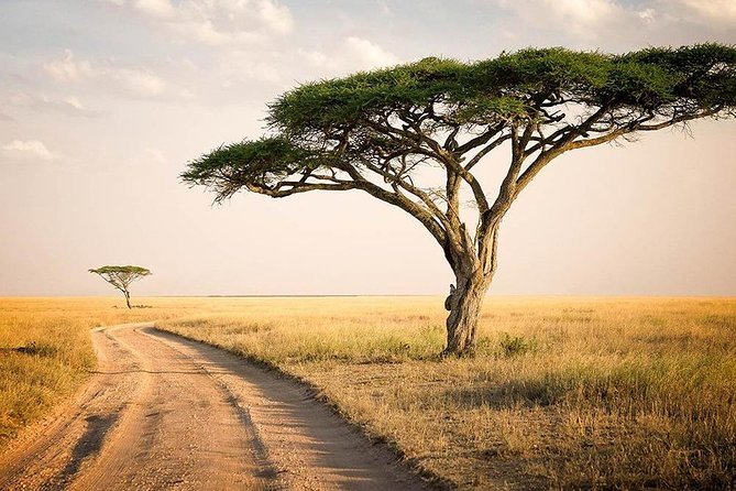Magnificent 6 Day Safari to Tarangire, Serengeti, Ngorongoro and Lake Manyara NP