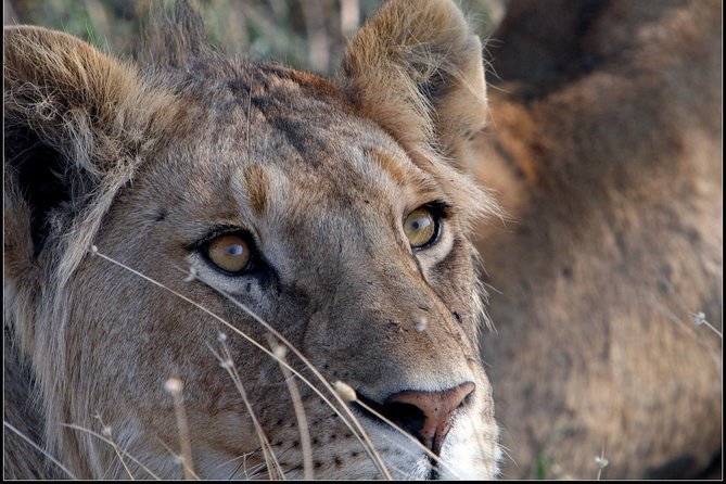 Express Safari to the Ngorongoro crater and highlands, one full day adventure.
