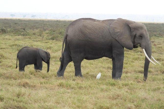 7 Days Amboseli National Park,Lake Naivasha and Maasai Mara Safari