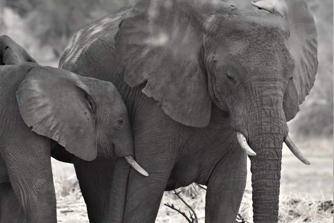 4-Day Ruaha National Park Wildlife Safari