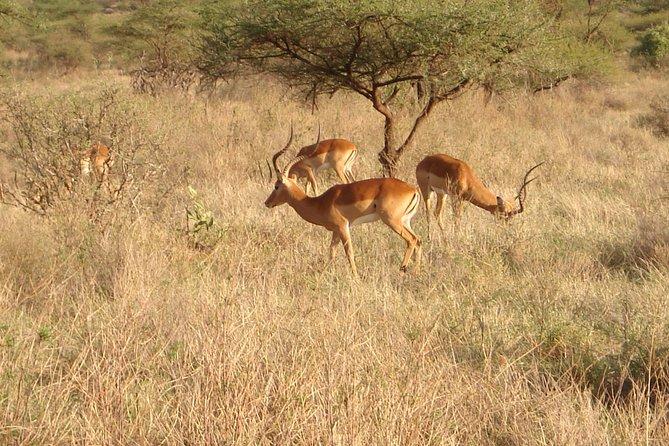 7 Days Samburu - Lake Naivasha - Mara Safari