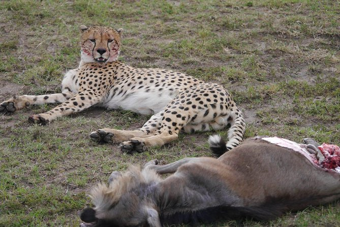 Amboseli National Park Day Tour from Nairobi photo 10