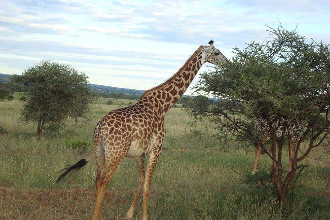 5 Days Tsavo East, Tsavo West and Amboseli Safari