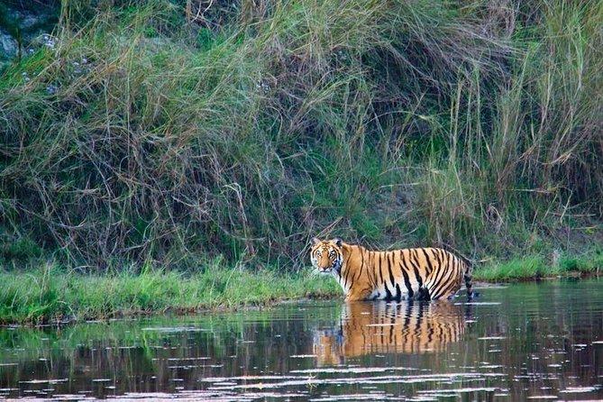 4 Days Bardia National Park Tour From Kathmandu