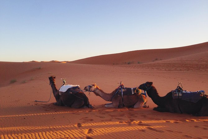 10 Days Trip: Morocco / Sahara Desert & Imperial Cities / Any starting point