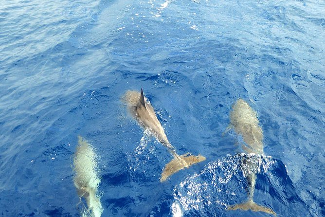 3 Hour All Inclusive Whale & Dolphin Watching Yacht Trip photo 8