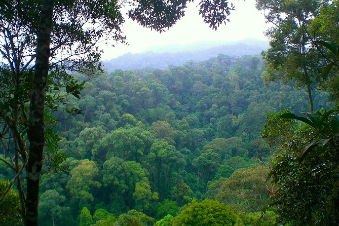 FAMILY JUNGLE TOUR: Orangutan Trek (4-hours hike) by EcoTravel Bukit Lawang photo 2