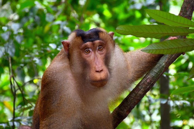 FAMILY JUNGLE TOUR: Orangutan Trek (4-hours hike) by EcoTravel Bukit Lawang photo 7