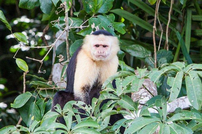 Parque Nacional Soberania, Monkey Island e Indian Village da Cidade do Panamá