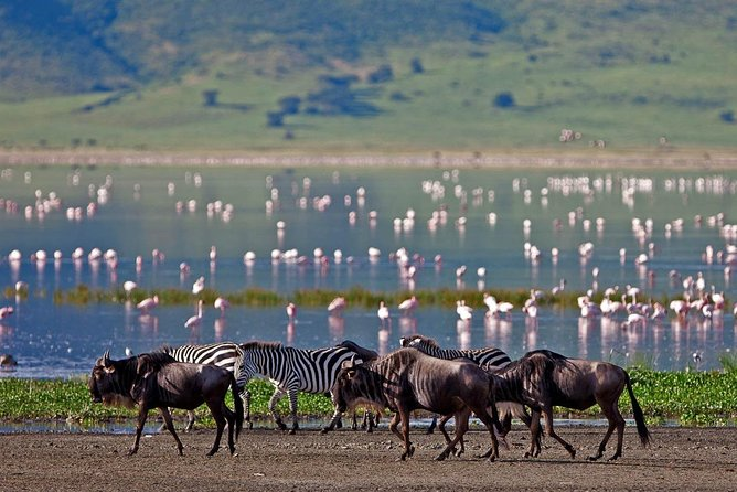 Splendid 5 Day Safari to Tarangire, Serengeti, Ngorongoro and Lake Manyara N.P