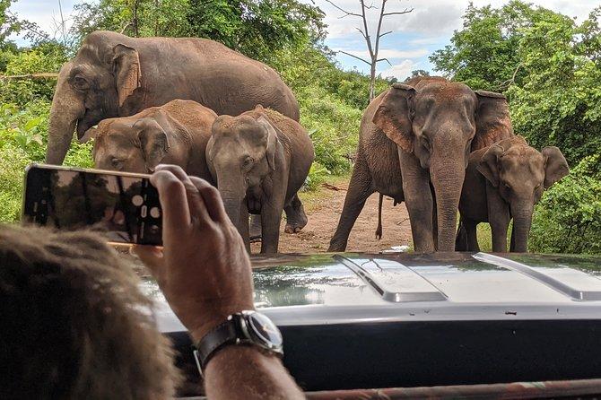 Udawalawe National Park safari and baby elephant feeding