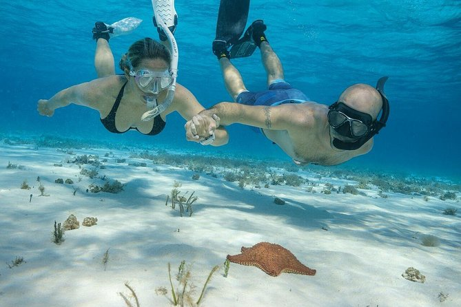 SNORKEL in 3 fantastic reefs in COZUMEL. With Transportation, Lunch, Boat Ride.