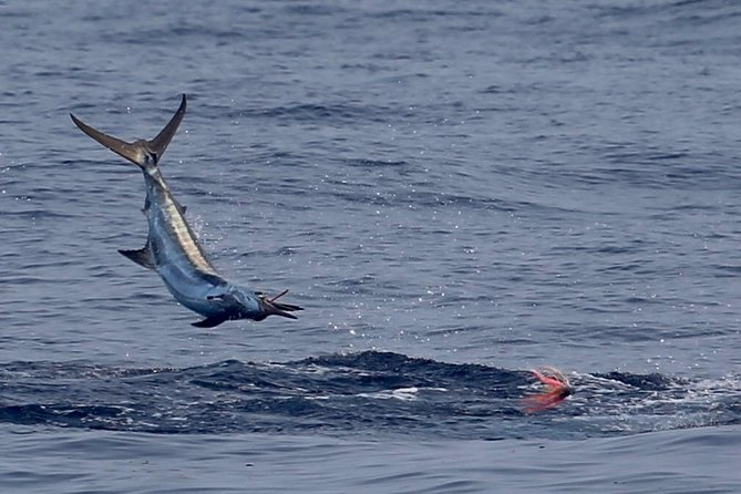 Full Day Sportsman/Enthusiast Charter
