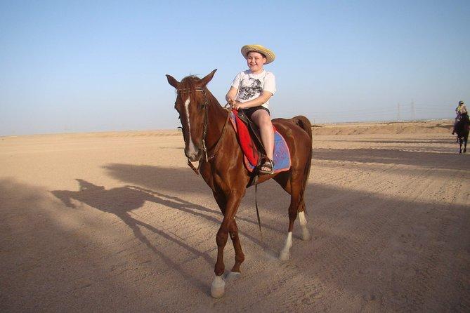 One Hour Horse Or Camel Riding - Sharm El Sheikh