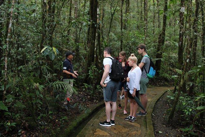 National (Kinabalu Park) & Poring Hotspring Tour