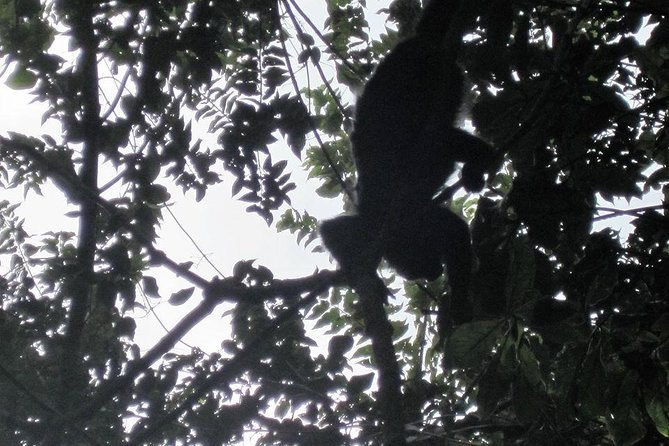 See and Hear Monkey River Howler Monkey's Day Tour