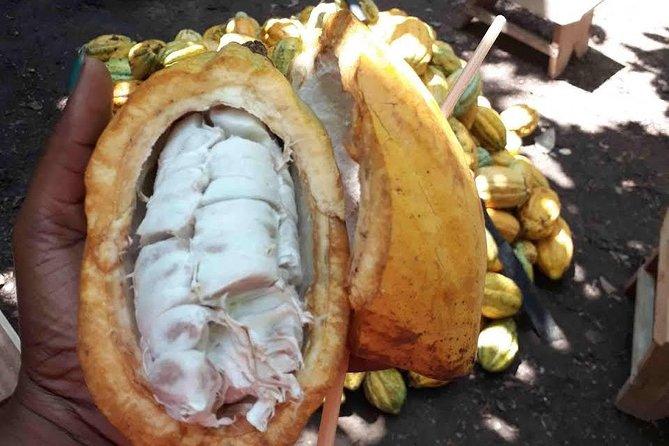 1 Day cocoa farm tour
